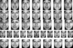 Facial Expression Decomposition